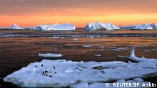 Adelie penguins stand atop ice near the French station at Dumont díUrville in East Antarctica, January 22, 2010. Picture taken January 22, 2010. REUTERS/Pauline Askin/File photo (c) REUTERS/P. Askin
