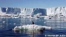 An Adelie penguin stands atop a block of melting ice near the French station at Dumont díUrville in East Antarctica January 23, 2010. Picture taken January 23, 2010. REUTERS/Pauline Askin/File photo (c) REUTERS/P. Askin