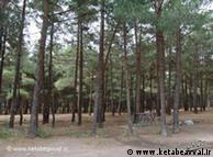 جنگلهای اطراف تهران