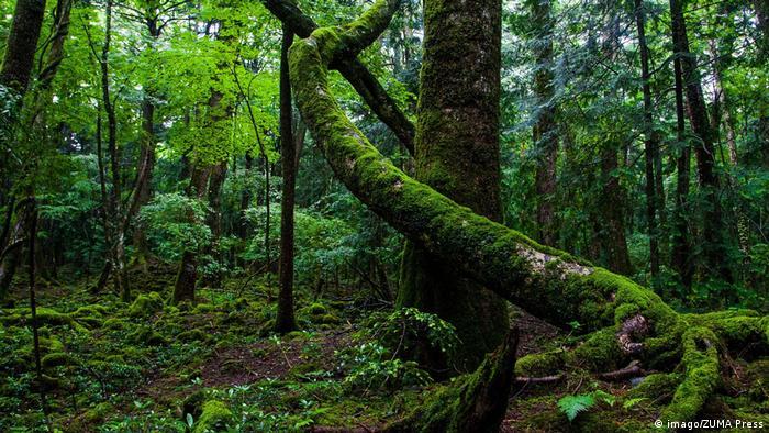 Japan Aokigahara Wald