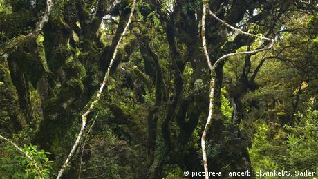 Neuseeland Goblin Wald
