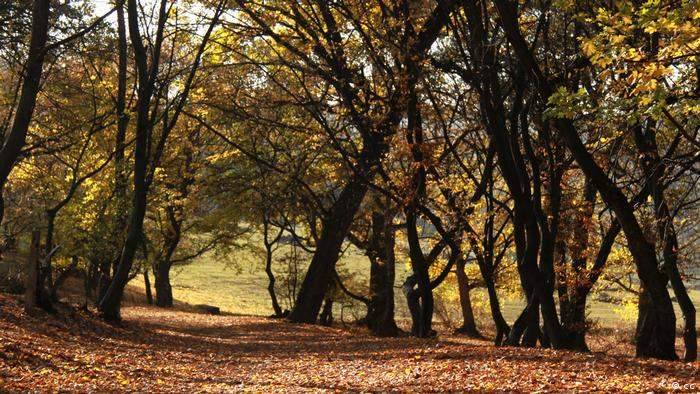 Rumänien Wald Hoia (Padurea Hoia) (cc)