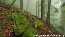 Rumänien Wald mit Moos