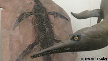 Esqueleto petrificado y reconstrucción de un pliosaurio.