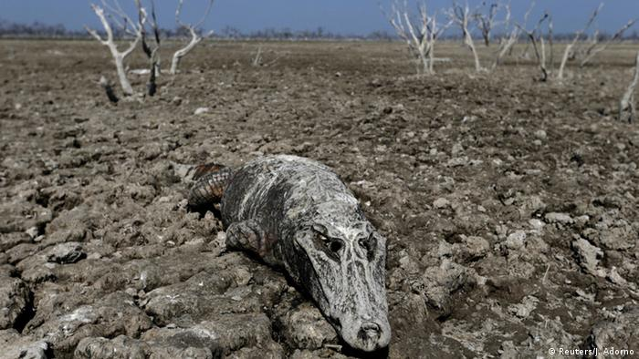 Paraguay Pilcomayo Dürre Flußbett Tiere (Reuters/J. Adorno)