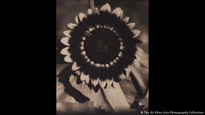 Ausstellung The Radical Eye (Foto: The Sir Elton John Photography Collection)