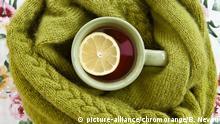 Tasse Tee mit warmen, gruenem Schal auf Blumenmuster   Verwendung weltweit Zitrone