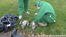 Geflügelpest / Vogelgrippe im Norden