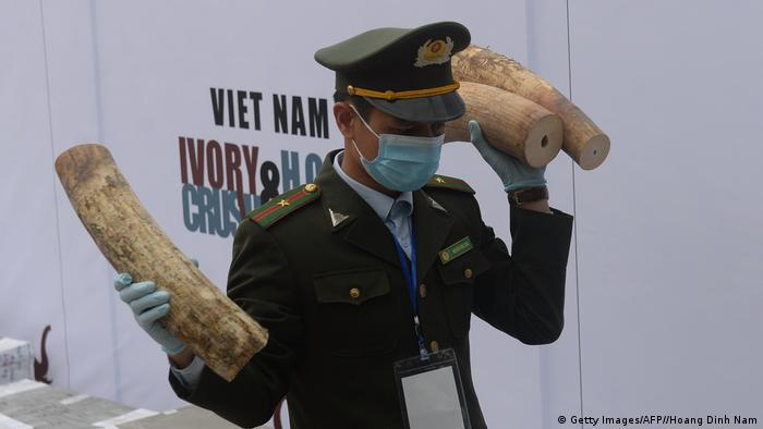 Official carrying ivory (Getty Images/AFP//Hoang Dinh Nam)