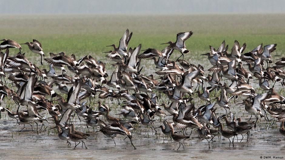 Bangladesch - Nijhum Dwip