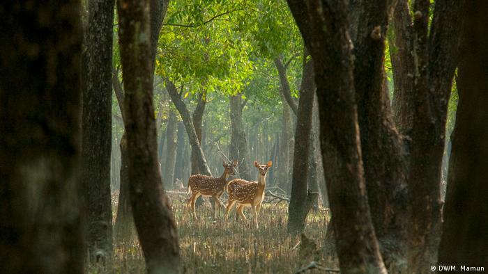Bangladesch - Nijhum Dwip (DW/M. Mamun)