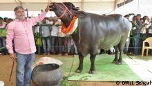 Indien Jaipur - Cattle fair India 2016 (DW/J. Sehgal)