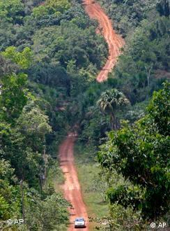 Florestas africanas desaparecem a um ritmo superior ao desmatamento na América Latina.