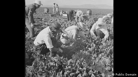Zweiter Weltkrieg Internierung japanischstämmiger Amerikaner Erntehelfer (Public Domain)