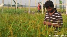 Bangladesch Biologische Landwirtschaft