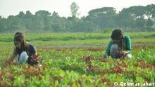 Delowar Jahan, a farmer and journalist, encourages other farmers about organic farming. Photo: Delowar Jahan