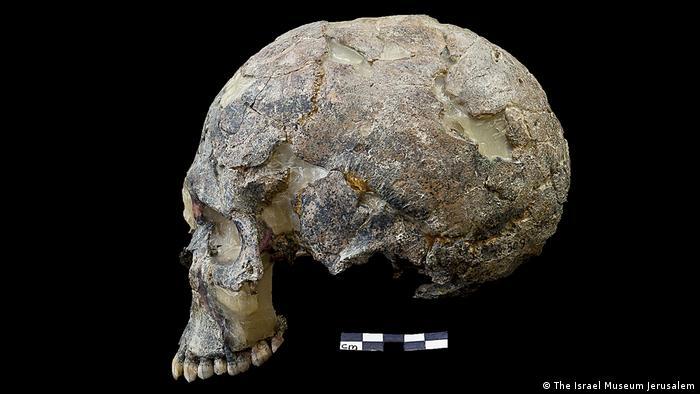 human skull (The Israel Museum Jerusalem)