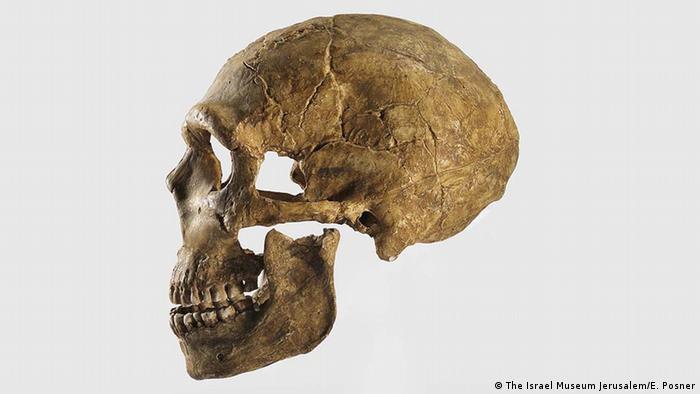 human skull (The Israel Museum Jerusalem/E. Posner)
