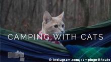 DW Sendung Shift - Camping with Cats
