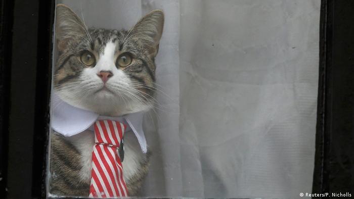 London Botschaft Ecuador Julian Assange's Katze Fenster (Reuters/P. Nicholls)