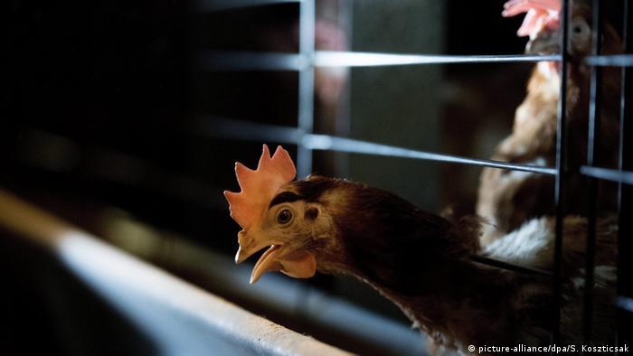 Hong Kong confirms second human case of H7N9 bird flu
