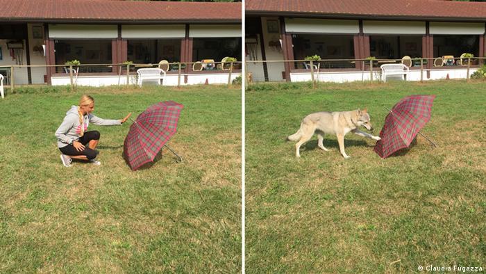 Hunde erinnern sich an nebensächliche Dinge
