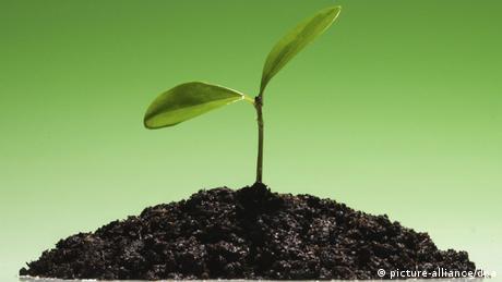 Keimendes Pflänzchen Symbolbild für Wachstum