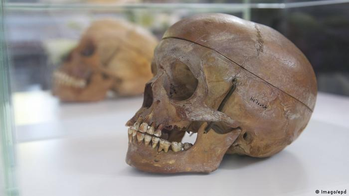 Skull from the genocide in Namibia on display in Berlin (Imago/epd)