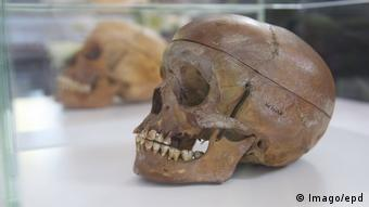 Skull said to be from victim of Namibian genocide