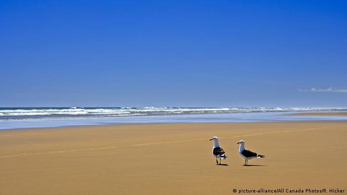 Neuseeland Strand Ripiro in Kaipara, West Coast (picture-alliance/All Canada Photos/R. Hicker)