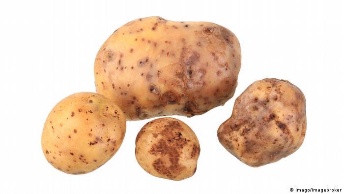 Bonnotte-Kartoffeln