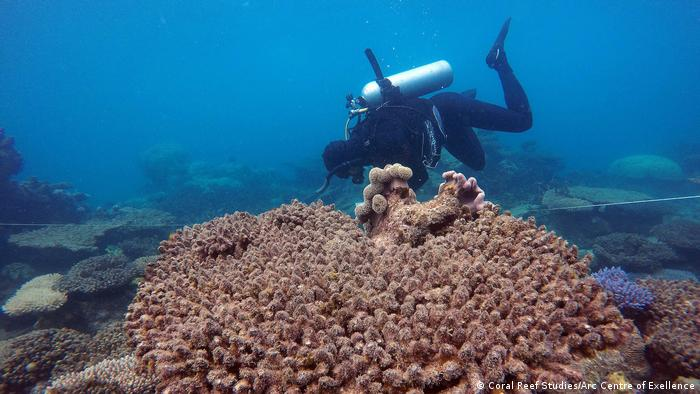 Red Zone Bleaching Mortality (Coral Reef Studies/Arc Centre of Exellence)