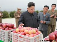 Серед галузей КНДР, які показали зростання торік - сільське господарство