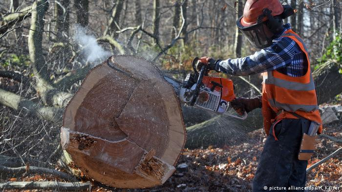 Clearing work in Germany's Hambach forest