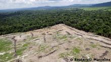 Brasilien Kampf gegen illegale Abholzung