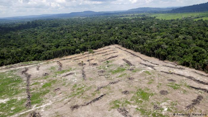 Brazil fights illegal logging (Reuters/U. Marcelino)