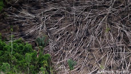 razil fights illegal logging (Reuters/U. Marcelino)