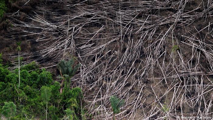 Illegal logging in Brazil