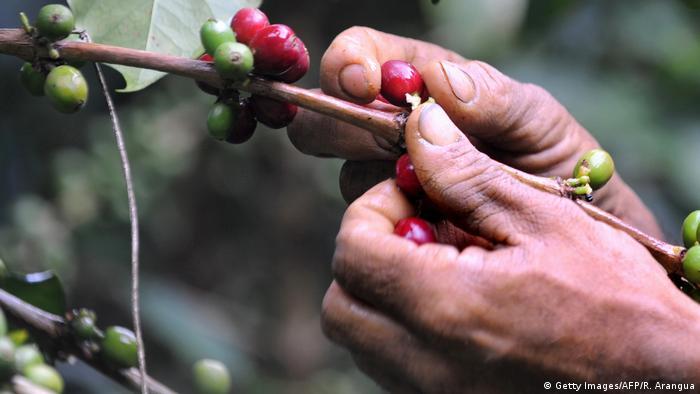 Foto de manos cortando café