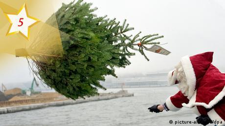 Adventskalender Weihnachtsbaum-Trend (picture-alliance/dpa)