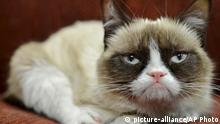Grumpy Cat (picture-alliance/AP Photo)