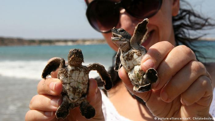 Zypern Naturschutzprojekt für Schildkröten (picture-alliance/dpa/K. Christodoulou)