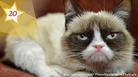 Grumpy cat (picture-alliance/AP Photo/Nestle Purina PetCare)