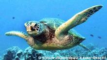Artenvielfalt Grün-Schildkröte