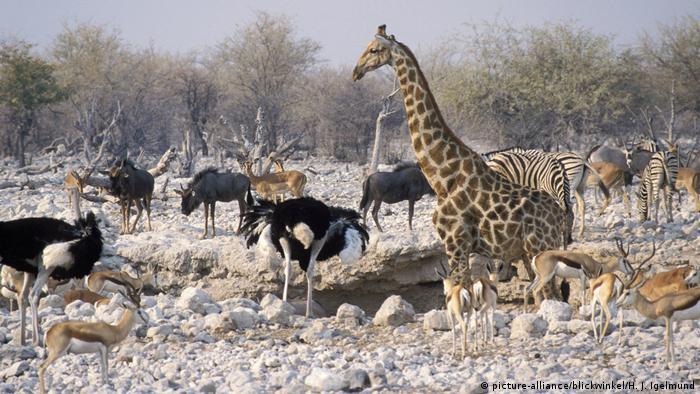 I životinje se u Namibiji bore sa sušom