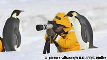 Kaiserpinguine (picture-alliance/WILDLIFE/S. Muller)