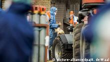 epa05649573 Workers wearing a protective gear cull ducks with gas as prevention against bird flu at a duck farm in Hierden, The Netherlands, 27 November 2016. Around 180.000 ducks on the farms will be culled following the H5N8 form of bird flu outbreak in an other locations of this duck farm company in the Netherlands. EPA/REMKO DE WAAL |