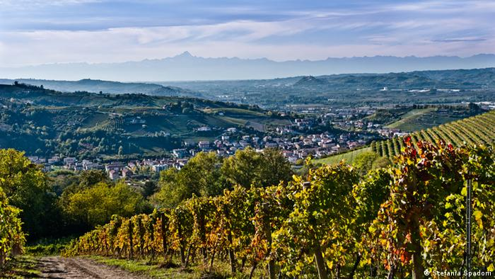 Vineyards of Piedmont with wooded area in background (Stefania Spadoni)