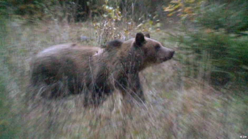 German hiker fights off bear in Romania | News | DW | 11 06 2019
