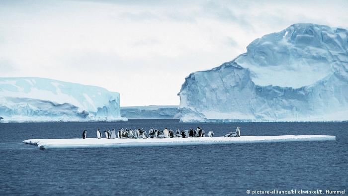 Antarktis Impressionen (picture-alliance/blickwinkel/E. Hummel)
